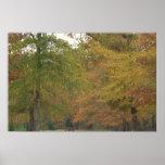 hojas de otoño 5 poster