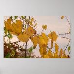 hojas de otoño 6 poster