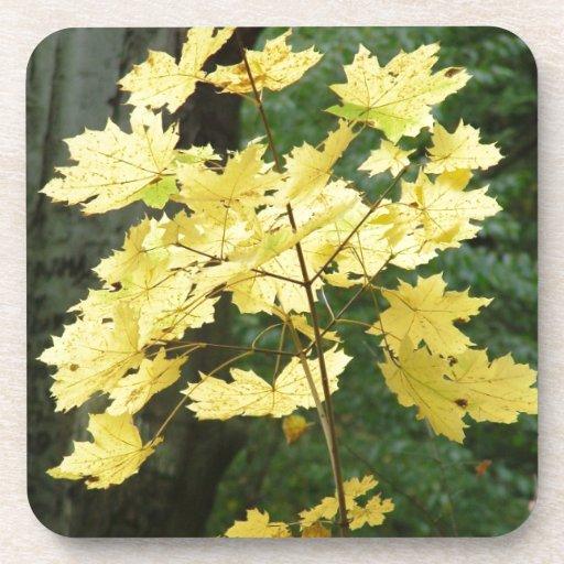 Hojas de otoño amarillas posavasos de bebidas