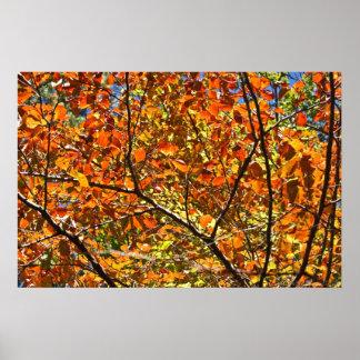 Hojas de otoño anaranjadas del agolpamiento poster