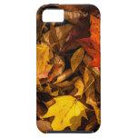 Hojas de otoño ardientes iPhone 5 Case-Mate fundas