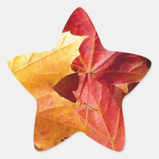 ¡Hojas de otoño - atontando! Colcomania Cuadrada
