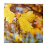 Hojas de otoño azulejo