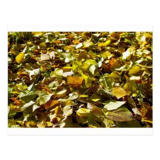 Hojas de otoño caidas en el primer del tilo del postal