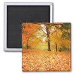 Hojas de otoño, Central Park, New York City Imán De Frigorifico
