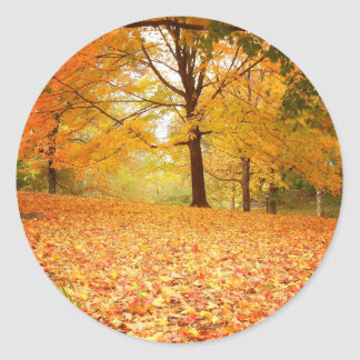 Hojas de otoño, Central Park, New York City Pegatina Redonda