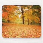 Hojas de otoño, Central Park, New York City Tapetes De Ratones