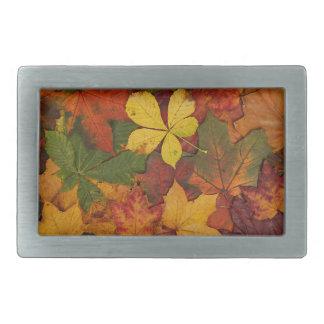 Hojas de otoño coloridas hebilla de cinturon