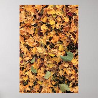 hojas de otoño coloridas impresiones