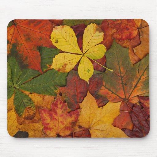 Hojas de otoño coloridas mousepads