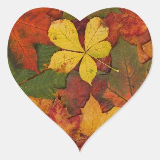 Hojas de otoño coloridas pegatina en forma de corazón