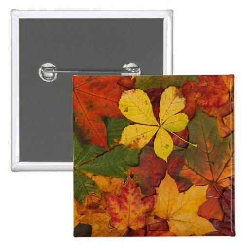 Hojas de otoño coloridas pin cuadrada 5 cm