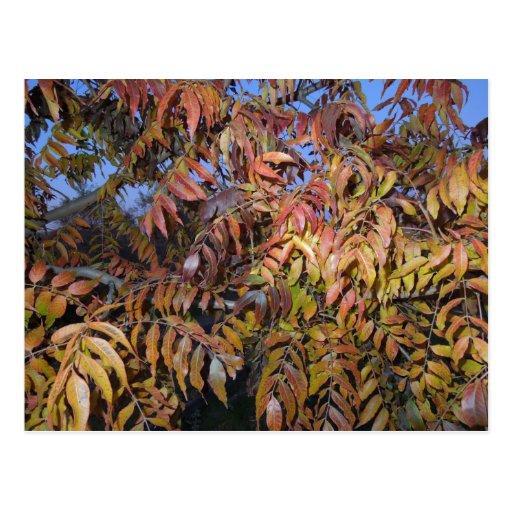 Hojas de otoño coloridas, pinadas tarjetas postales