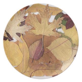 Hojas de otoño coloridas plato para fiesta