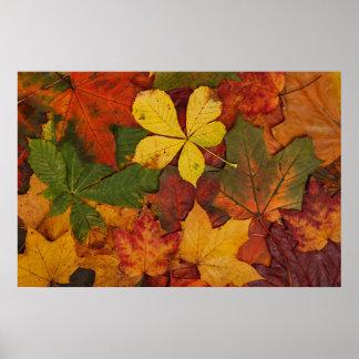 Hojas de otoño coloridas poster