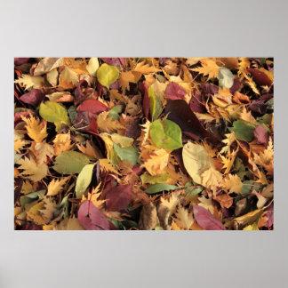 Hojas de otoño coloridas posters