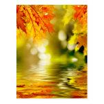 Hojas de otoño coloridas que reflejan en el agua 2 tarjetas postales