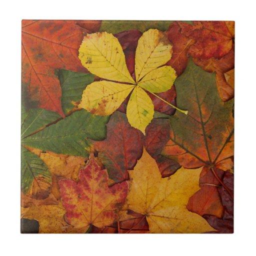 Hojas de otoño coloridas tejas  cerámicas