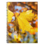 Hojas de otoño cuadernos