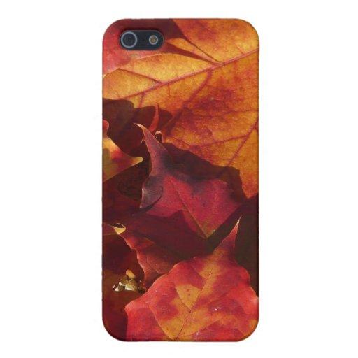 Hojas de otoño de la caída iPhone 5 carcasa