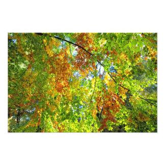 Hojas de otoño de la haya fotografía