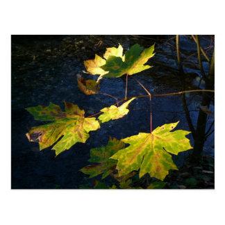 Hojas de otoño de oro devastadas tarjetas postales