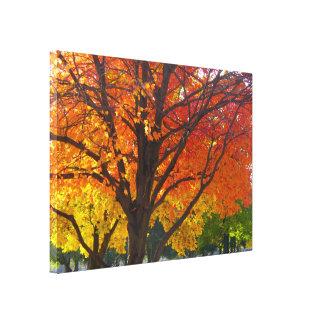 Hojas de otoño del amarillo y del naranja impresión en lienzo
