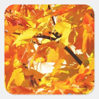 Hojas de otoño del árbol de arce pegatina cuadrada
