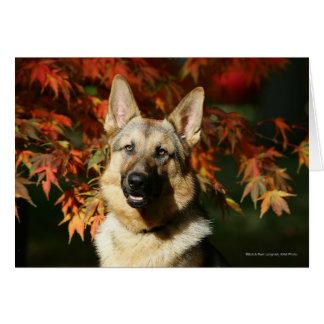 Hojas de otoño del pastor alemán tarjeta de felicitación