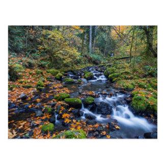 Hojas de otoño dispersadas a lo largo de la cala tarjetas postales