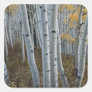 Hojas de otoño en árboles en bosque pegatina cuadrada