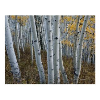Hojas de otoño en árboles en bosque tarjetas postales