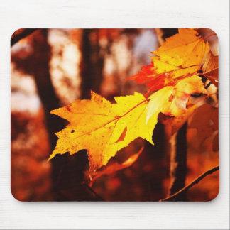 Hojas de otoño en el Poconos Alfombrilla De Raton