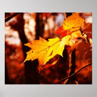 Hojas de otoño en el poster de Poconos