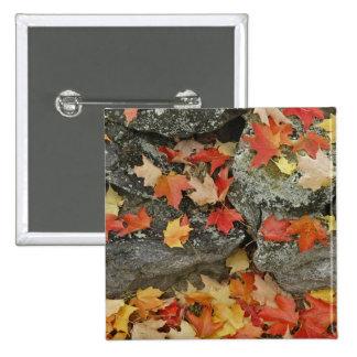 Hojas de otoño en la pared de piedra hombre minuc pin