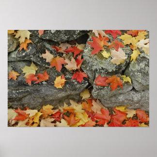 Hojas de otoño en la pared de piedra, hombre minuc póster
