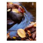 Hojas de otoño en la postal de la corriente de la