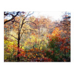 Hojas de otoño en Missouri Tarjetas Postales