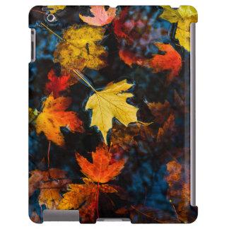 Hojas de otoño en una piscina del agua oscura