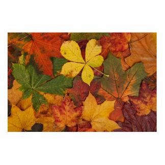 Hojas de otoño escultura fotográfica