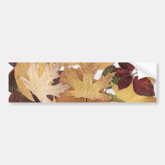 Hojas de otoño etiqueta de parachoque