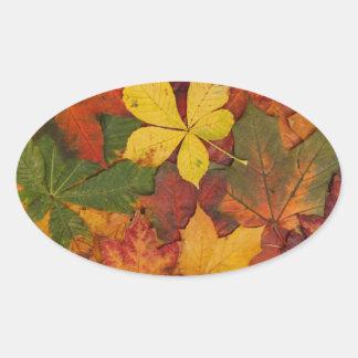 Hojas de otoño, follaje de otoño - rojo amarillo pegatina ovalada