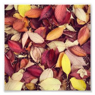 Hojas de otoño fotos