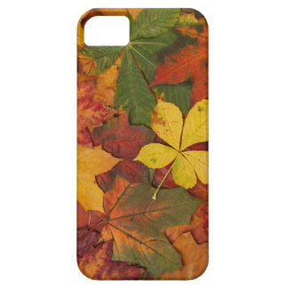 Hojas de otoño iPhone 5 Case-Mate coberturas