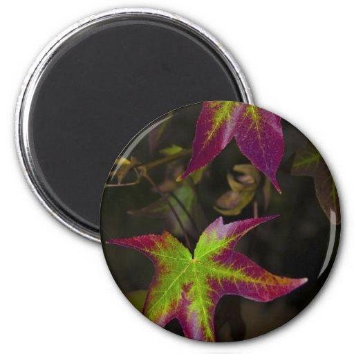 hojas de otoño imán de frigorífico