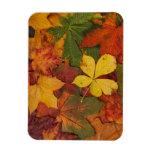 Hojas de otoño imanes flexibles