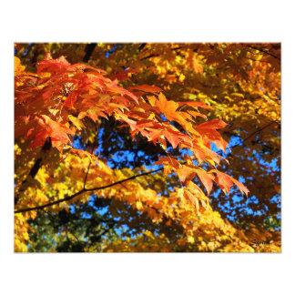 Hojas de otoño imponentes en el poster de la foto cojinete
