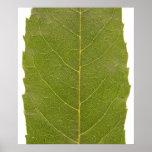 hojas de otoño impresiones