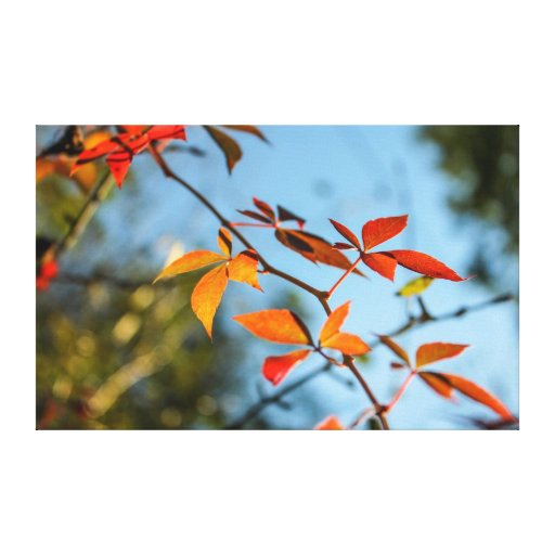 hojas de otoño impresiones en lona estiradas