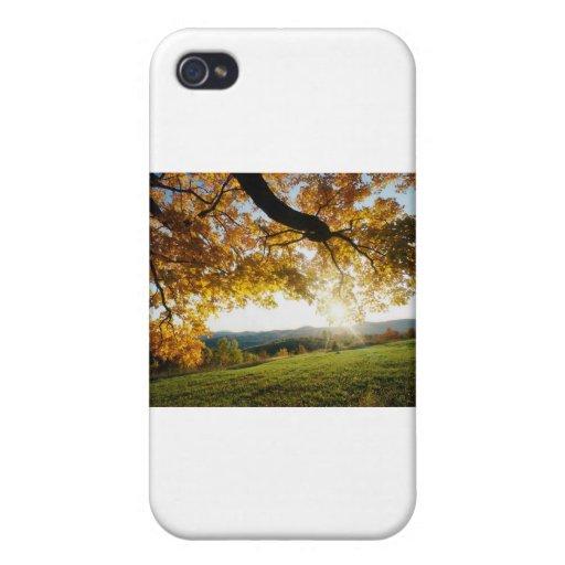 Hojas de otoño iPhone 4 carcasa